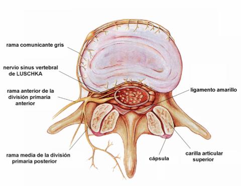 Síndrome Facetario Lumbar | Ramon Punzanoramonpunzano.com